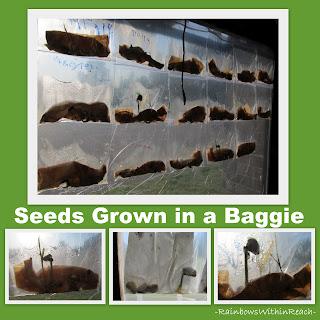 photo of: Science for Preschool, Science in kindergarten, seeds and growing