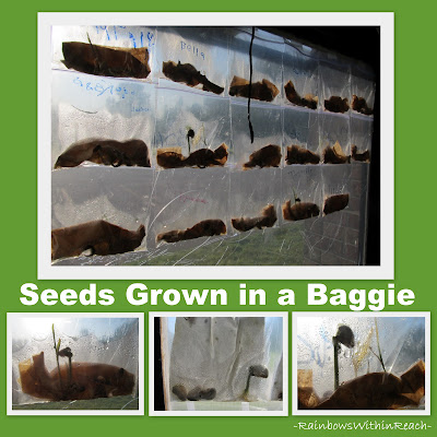 Science, Seeds, Spring! via RainbowsWithinReach