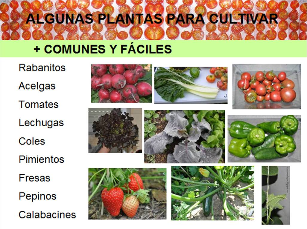 Soberania alimentaria marzo 2012 for Plantas ornamentales mas comunes