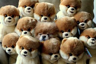Fotografias de animales graciosas