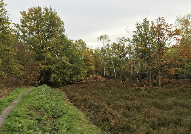 Heath in Petts Wood.  October 2015