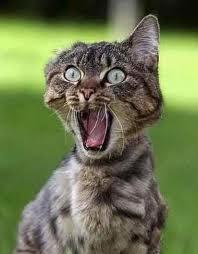 Gambar Kucing Kaget Aneh