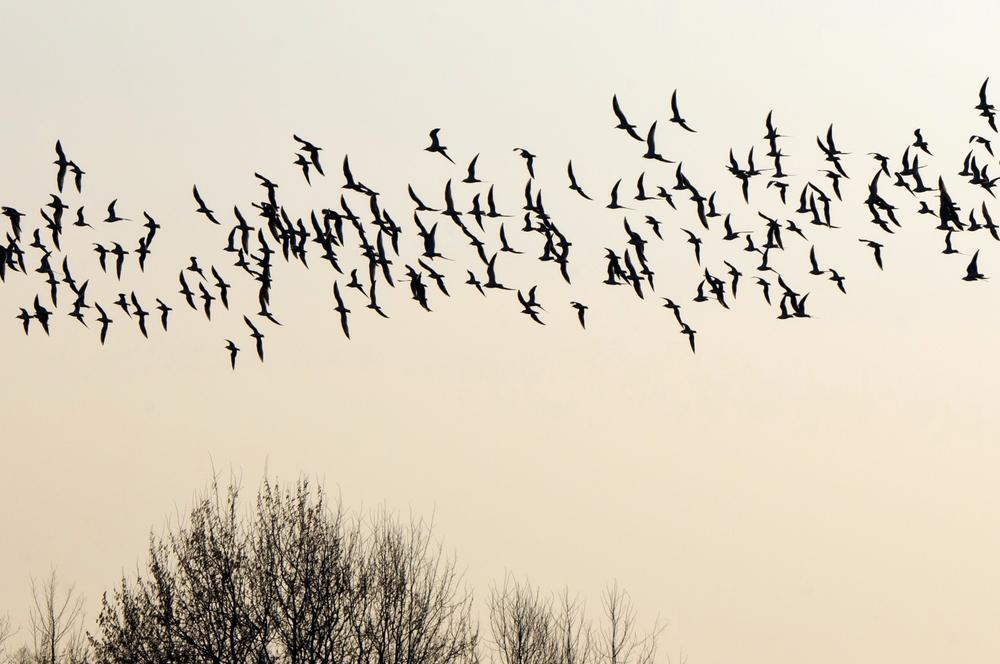 Birds fly south again