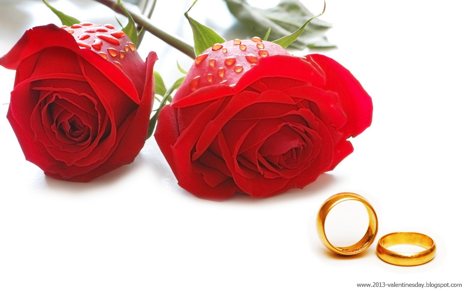 new latest happy rose day 2013 hd wallpapers online quotes gallery