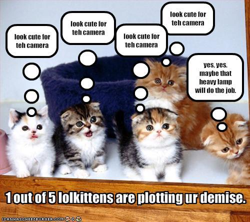 funny cute kitten videos