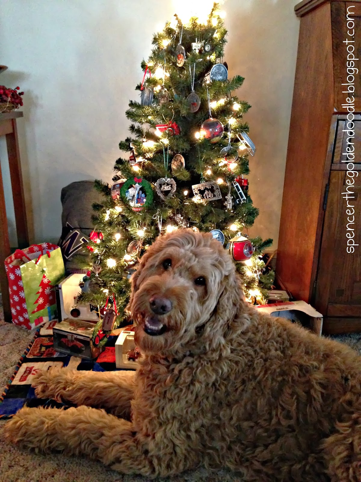 spencer the goldendoodle - Goldendoodle Christmas Decorations