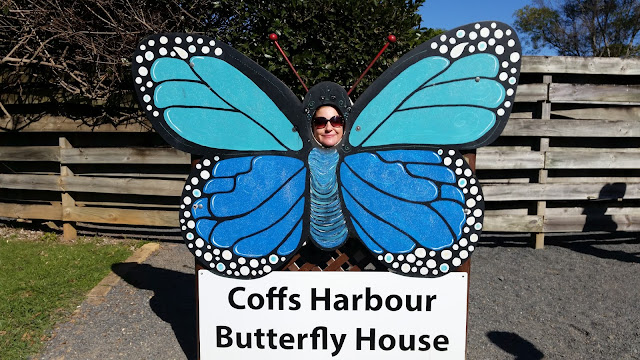 Amazona Butterfly