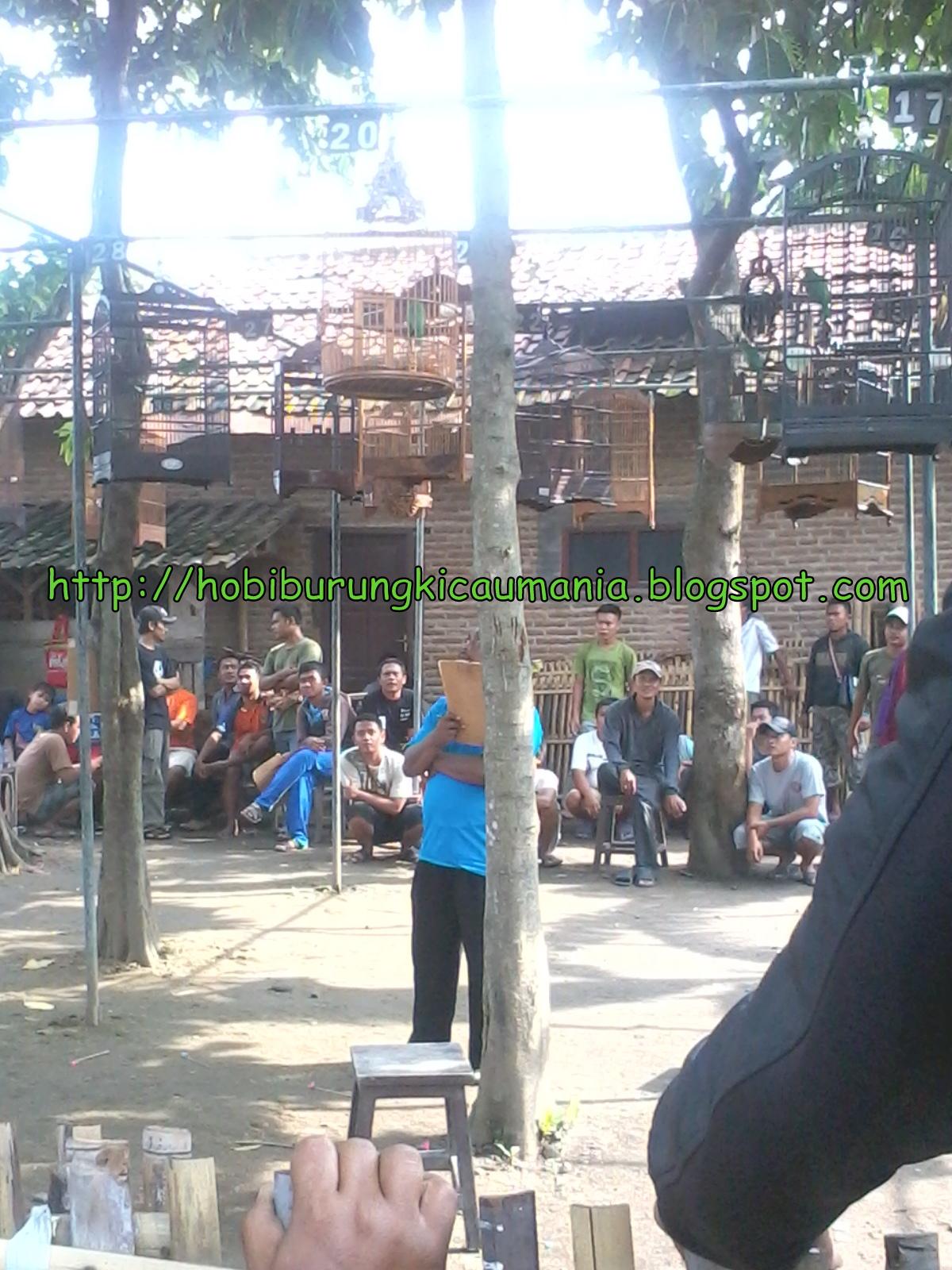 Ajang Test Mental Burung, Tegalwangi Cirebon