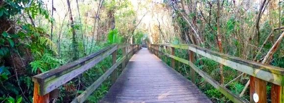 Holzweg über die Sümpfe vom Big Cypress Bend Boardwalk