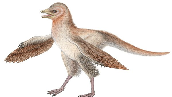 Eosinopteryx-reconst.jpg