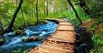 Aurel Gheorghe 🔴 Cine crede în Mine, din inima lui vor curge râuri de apă vie!