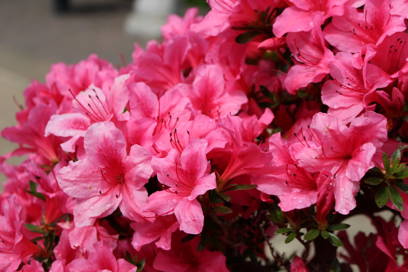 RHS Garden Wisley Photography Masterclass