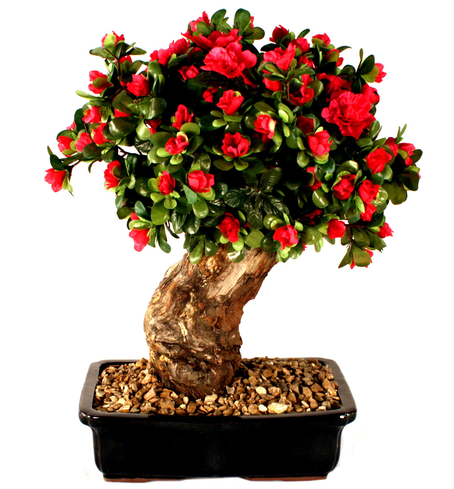Hassle Free Methods For Growing Indoor Bonsai Treezzz TikTok Newzz