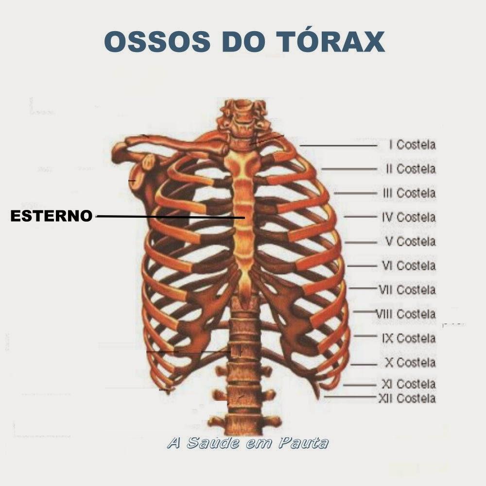 Nomes e localização dos ossos do tórax