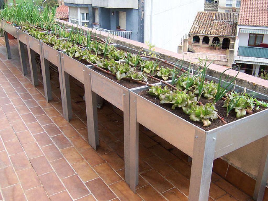 Huertos urbanos bah a de c diz m xico azoteas verdes for Huerto en azotea