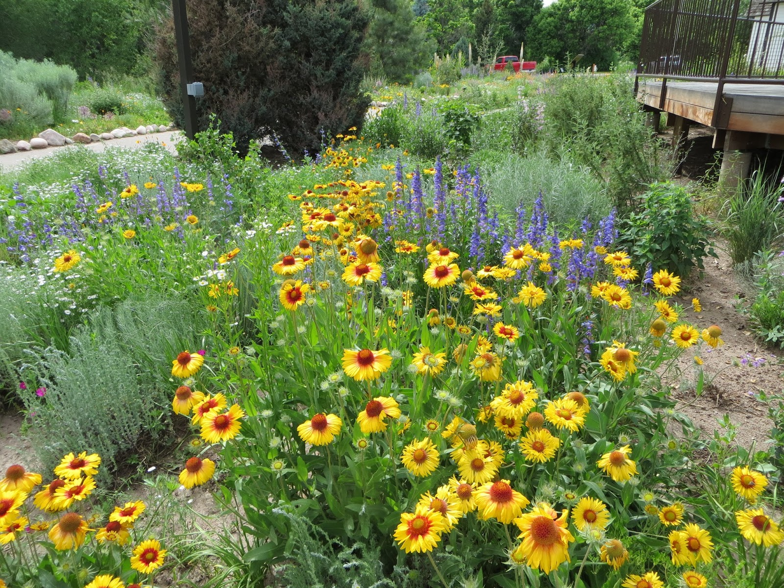 CO Horts Registration Open For Native Landscaping Conference