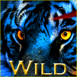 Jy's Gallery  Wild%2B3