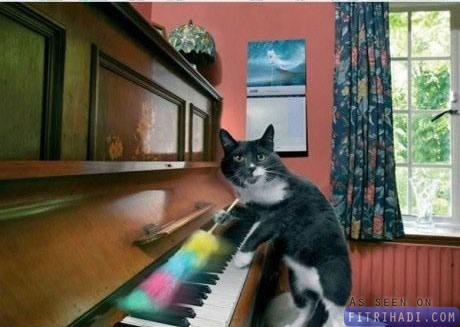 gambar kucing buat kerja rumah