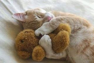 [Imagen: gato_peluche_dormir.jpg]