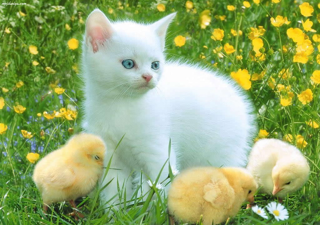 BABY ANIMALS,CUTE ANIMALS.Know Every Thing About IBPS Exams