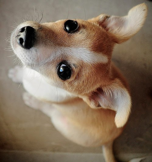 adorable dog close up pic