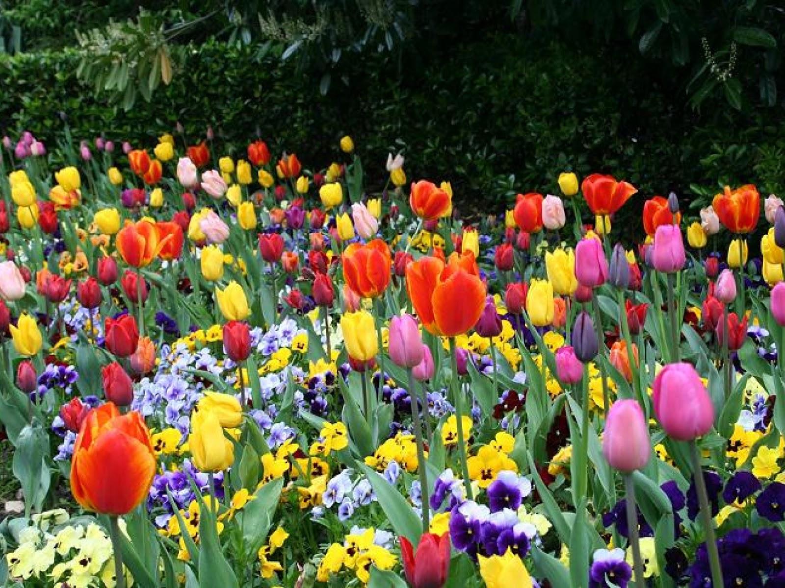 Fotos de flores de floriculturas 33