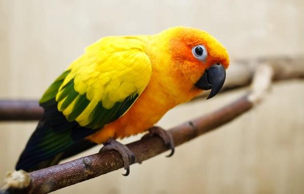 Попугай просит похмелиться анекдот