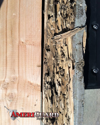 Drywood termite wood damage