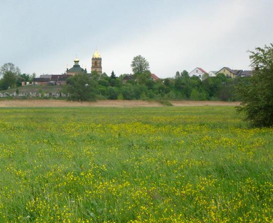 лютиковое поле