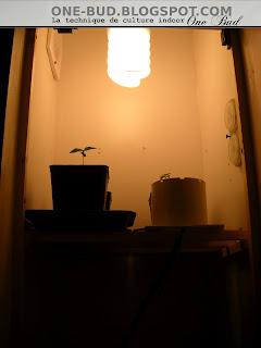 Une HPS De 150w Avec Une Vitre De Protection Limitant La Chaleur Pour Les  Plantes Et Protégeant La Lampe.