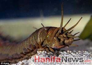 3. Killer Bristle Worm