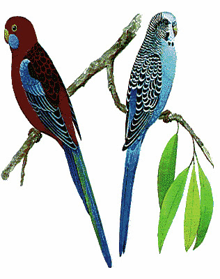 Valentine's LoveBirds Greeting Cards