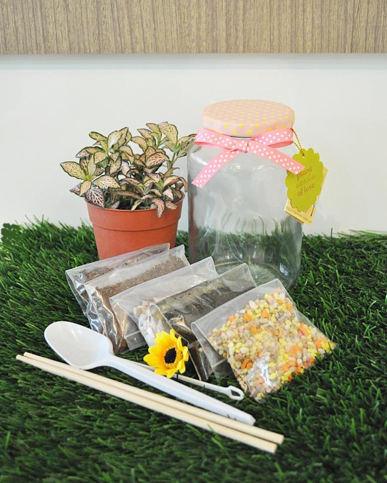 Diy Terrarium Kit Little Green Pot