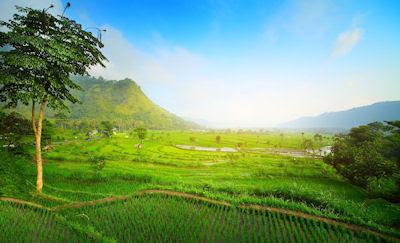 Valle tropical con terrazas de arróz en Bali, Indonesia.