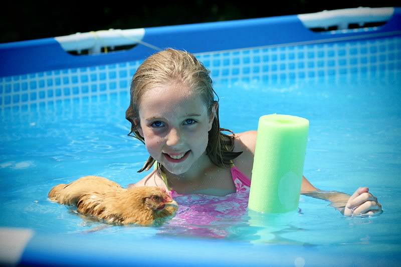 Our country chronicles silly swimming chickens i mean ducks i mean chickens for Keep ducks out of swimming pool