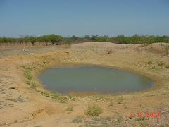 Água no barreiro da caatinga