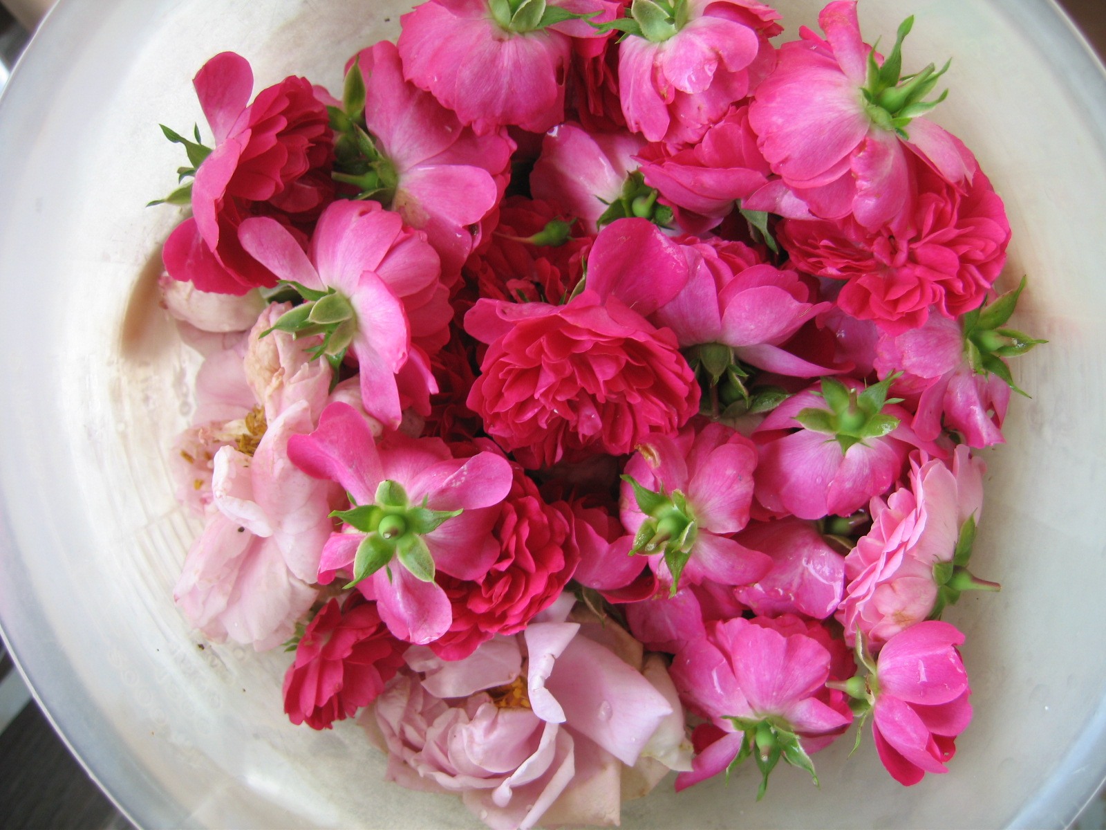 The Hydrosol Rose Water Challenge The Woodwife S Journal