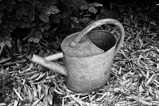 Watering can in black and white