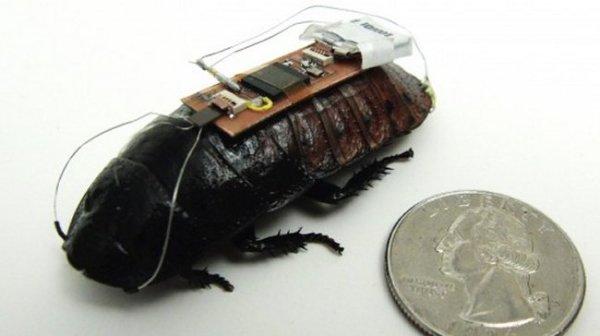 controllare scarafaggi