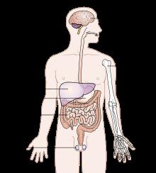 Tempat penyebaran kanker getah bening, ciri ciri kanker getah bening