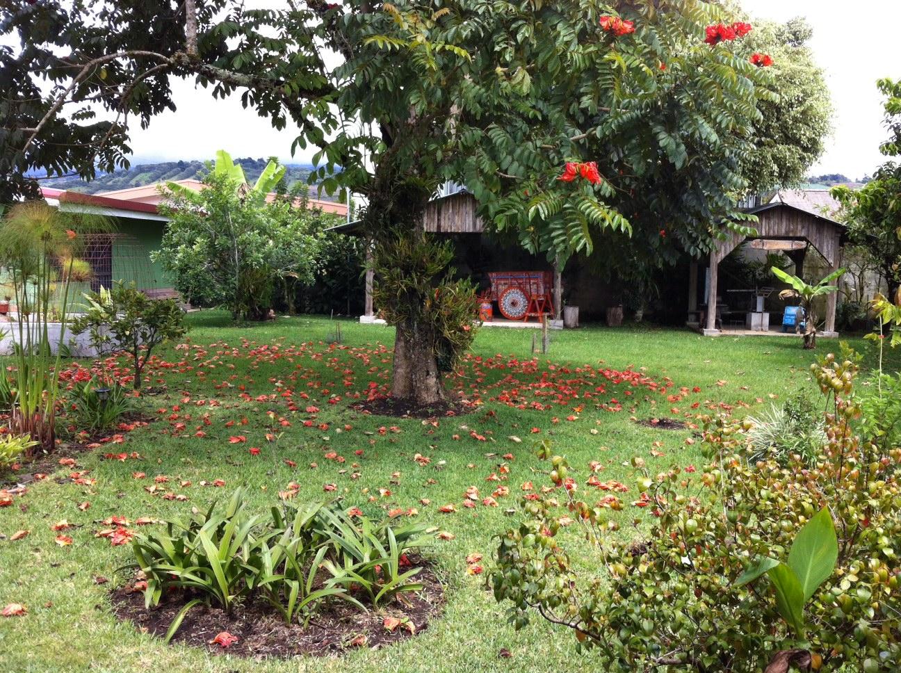 Venta propiedades costa rica casa for Arboles frutales para jardin