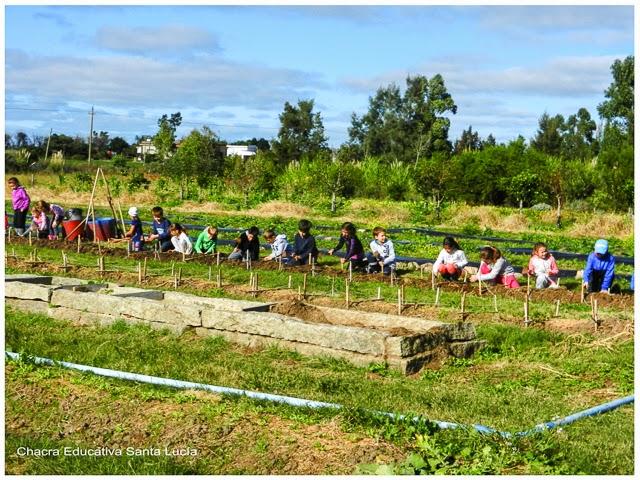 Alumnos trabajando en sus parcelas - Chacra Educativa Santa Lucía