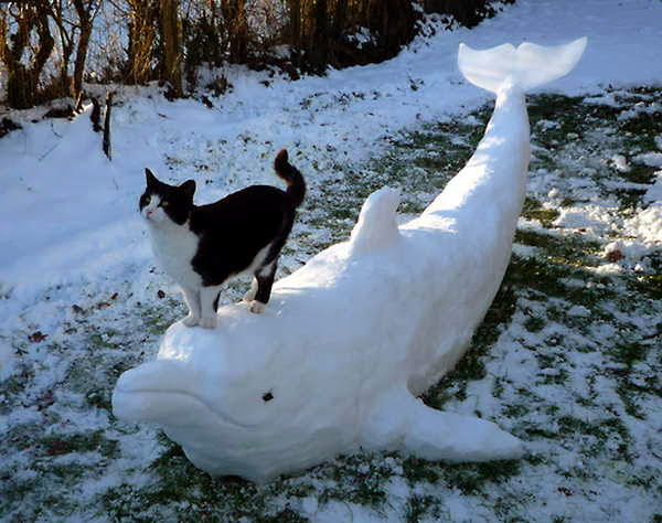 Funny cats - part 80 (40 pics + 10 gifs), cat stands on snow dolphin