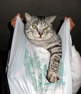 Risultati immagini per non dire gatto se non ce l'hai nel sacco
