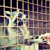 Podróże: Ośrodek rehabilitacji zwierząt w Mikołajówce