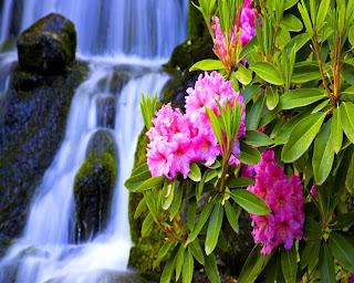 Fotografias de flores y cascadas