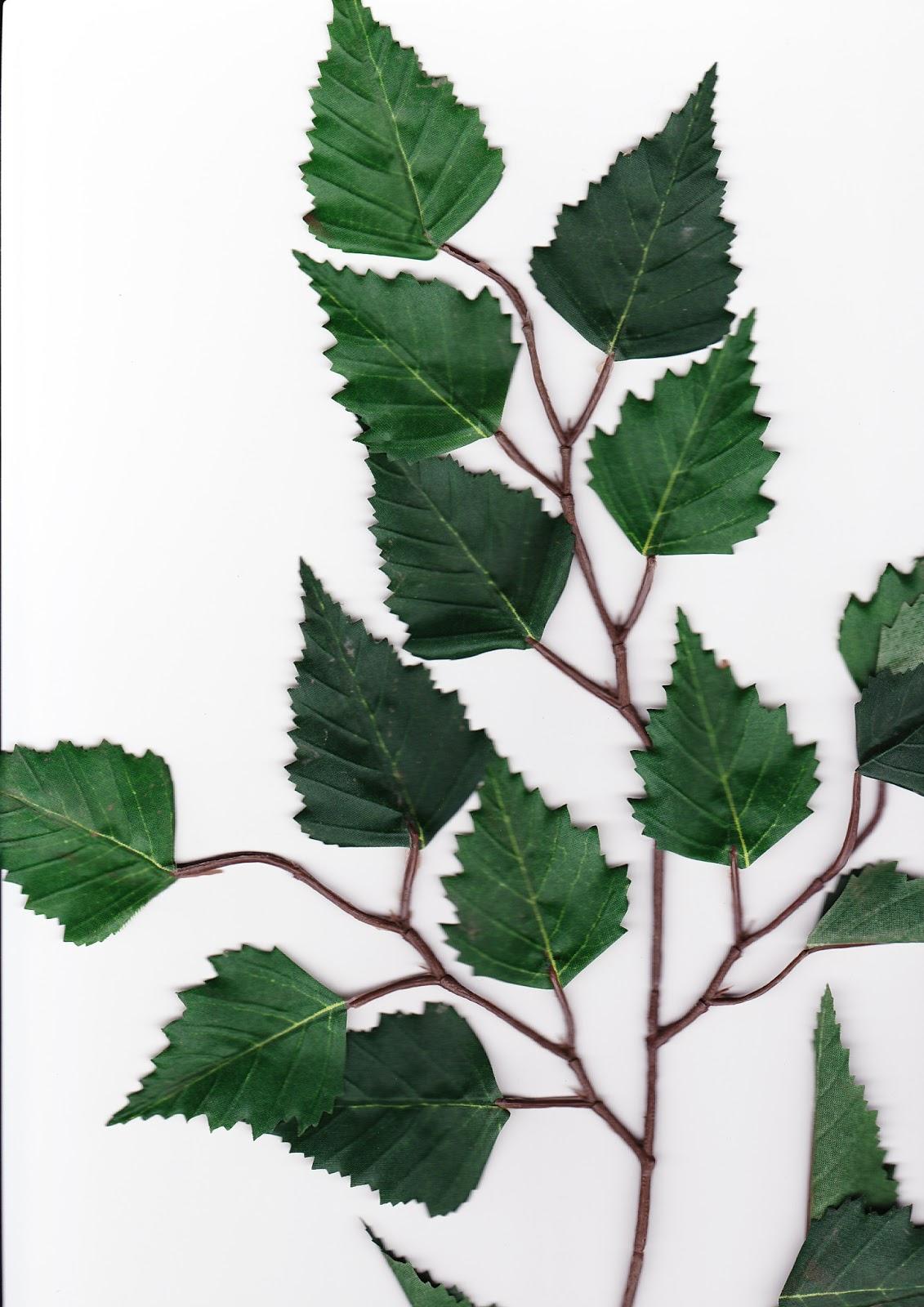 Fausses feuilles artificial leaves - Feuille de bouleau photo ...