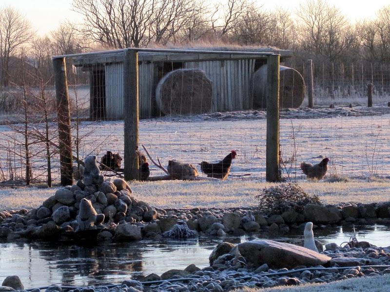 Landbohaven: kold men smuk morgen/dag.