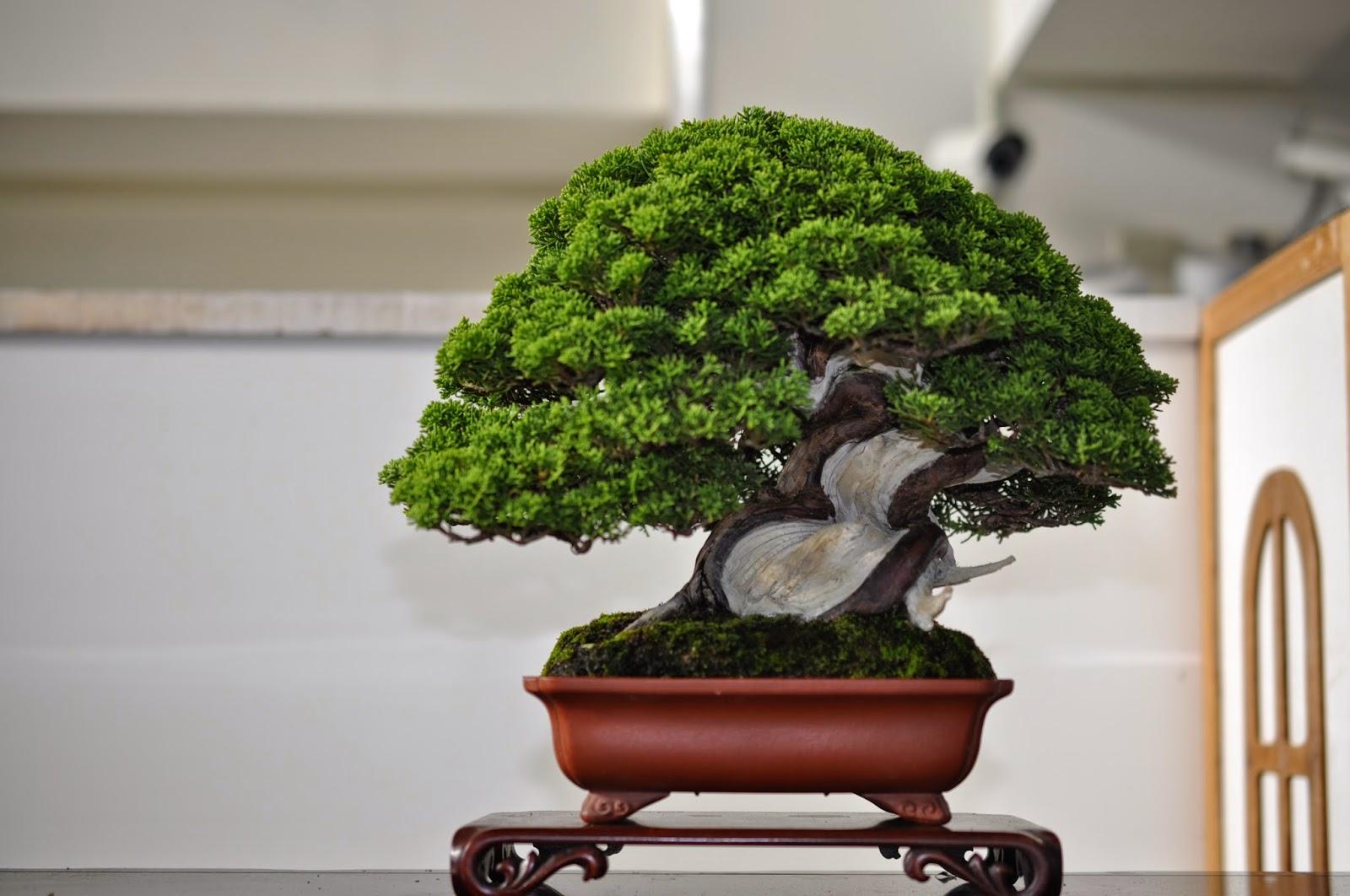 All In One Bonsai And Ceramics Taiwan Bonsai Exhibition