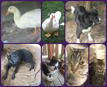 Some Past pets